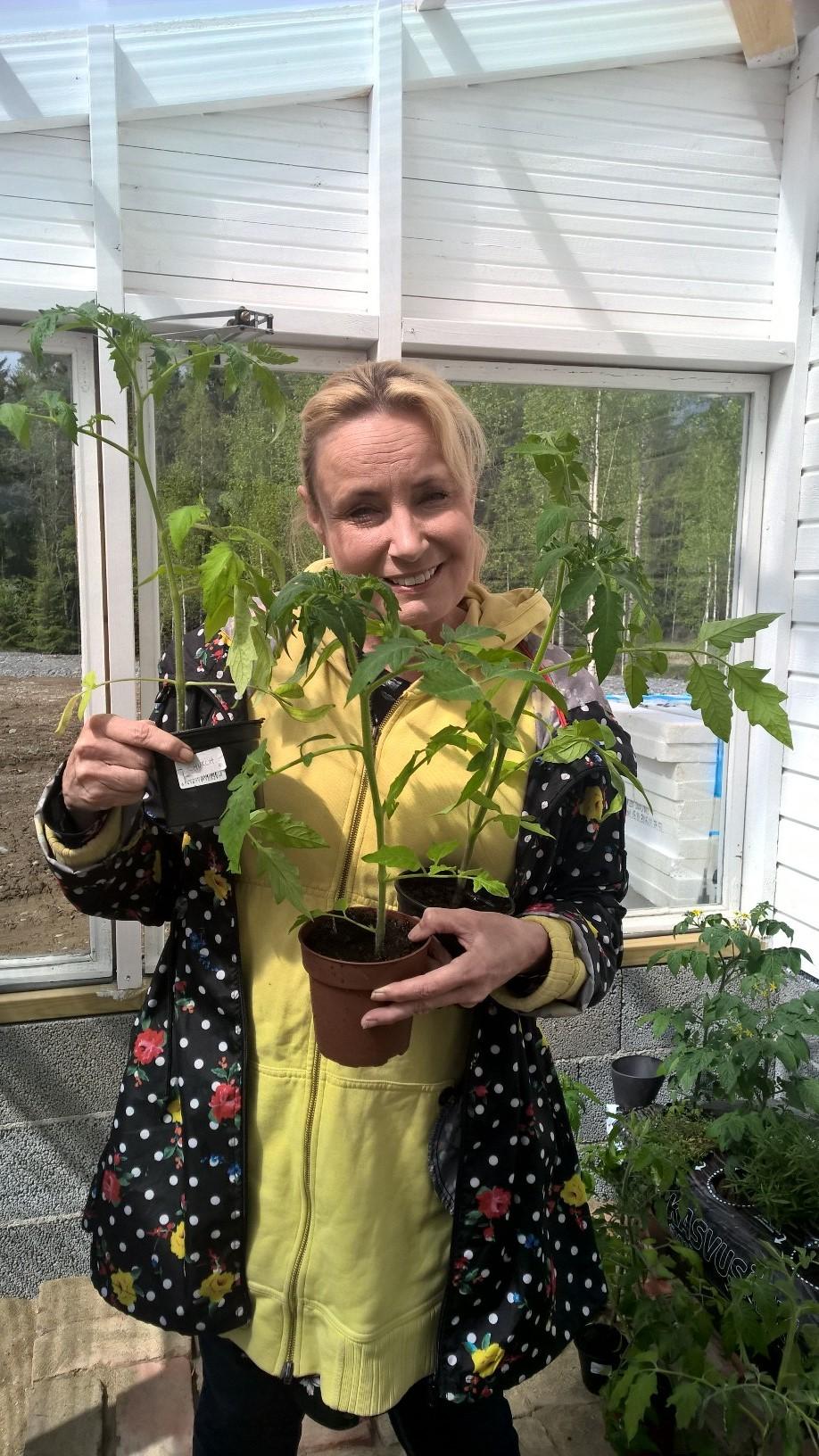 Sonja Lumme on kasvattanut tänä vuonna siemenestä 80 eri tomaattilajiketta.