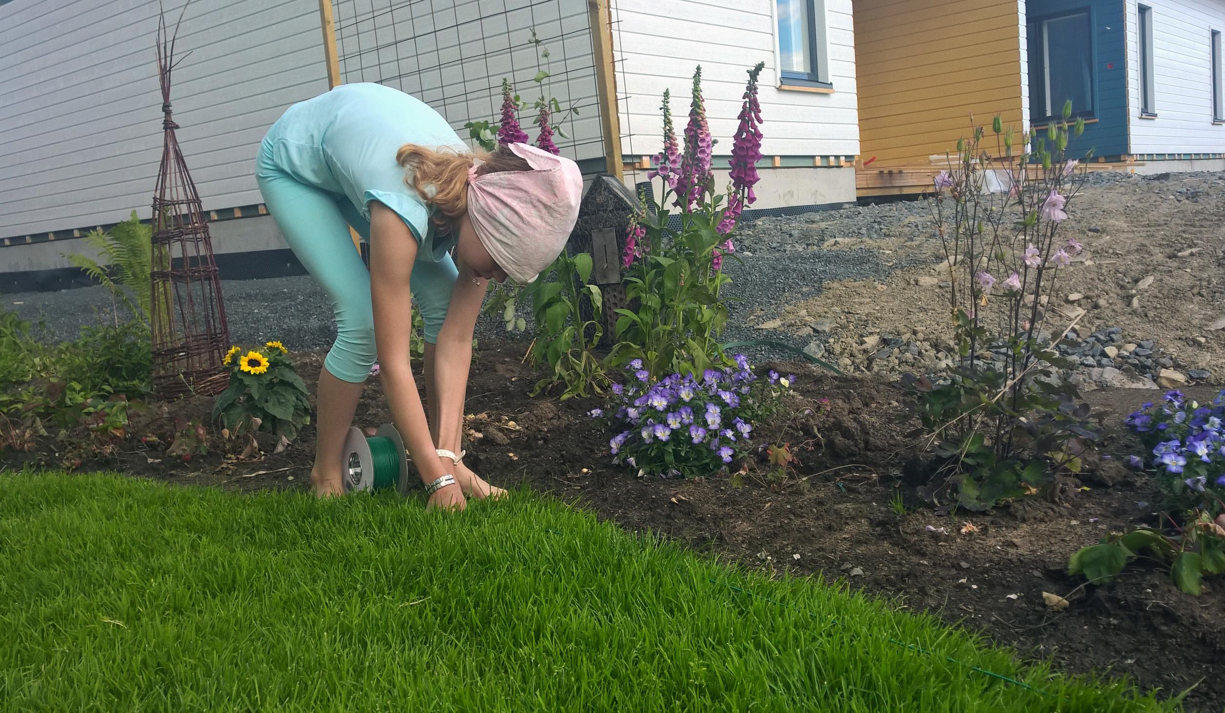 Rajauskaapeli asennetaan nurmikon pintaan, noin 5 cm leikkausalueen reunasta.