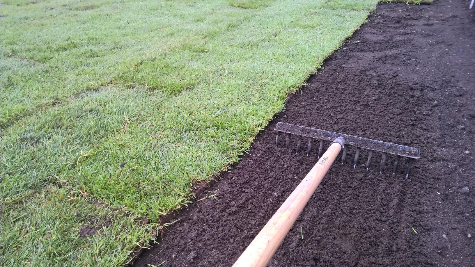 Harasin jyrätyn pinnan kevyesti rikki ennen asennusta, jotta hentojen juurien olisi helpompi työntyä uuteen multaan.