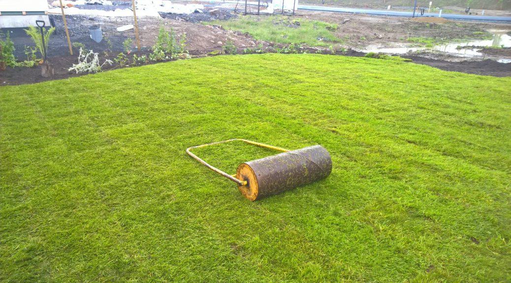 Asennuksen jälkeen jyräsin nurmikon vielä kerran, jotta nurmimatto otti tiukkaan kiinni multapohjaan.